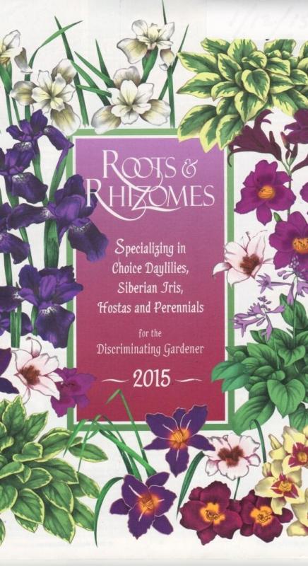 Roots & Rhizomes